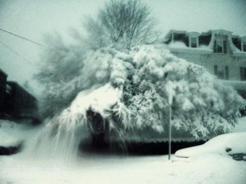 SNOW, FOX CHASE2-10-10 022