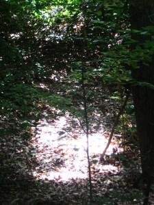 Ryerss-Burholme Park West Woodlands and Picnic Area 017