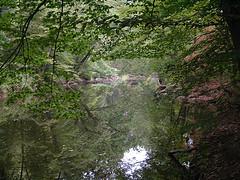 Pennypack Creek between Veree Road and Pine Road- Philadlephia, Pa