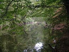 Pennypack Creek between Veree Road and Pine Road- Philadlephia, Pa