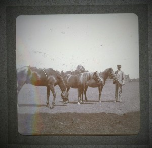 Robert Waln Ryerss with horses in pasture circa late 1800's courtesy of Ryerss Museum and Library