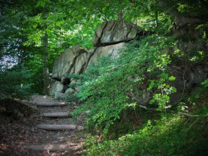 Trail at Pennypack Nature Sanctuary