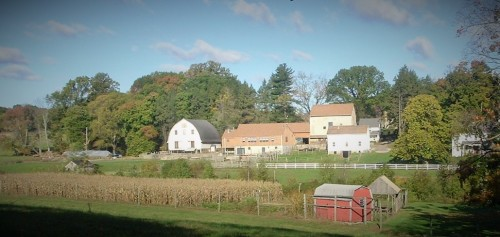 Fox Chase Farm 1
